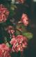 tumblr_mi2l3kwSIf1qgn6feo1_500